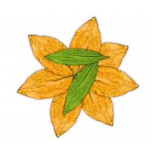 7 Leaves - Αρωμα Flavour Art